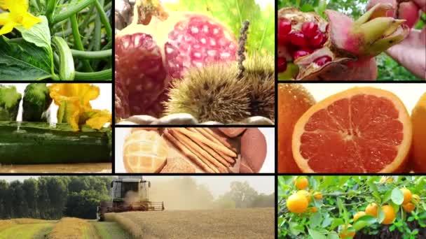 betakarítás és mezőgazdasági termékek