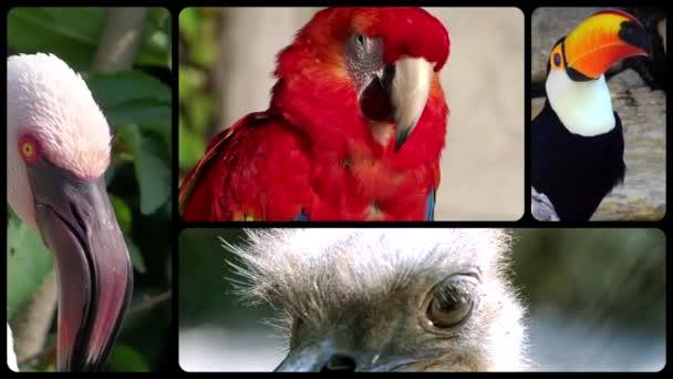 ptáci, fotomontáž