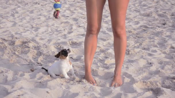 Jack russel and beautiful girl on vacation