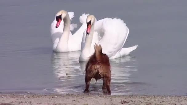 μεγάλο τριχωτό πουλί βίντεο