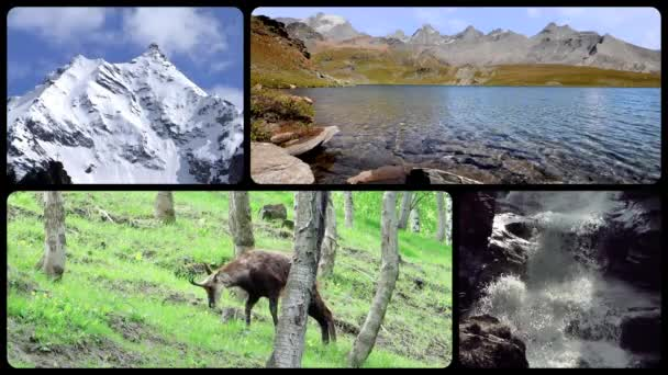 Alps montage. Landscapes, animals and people into the wild.