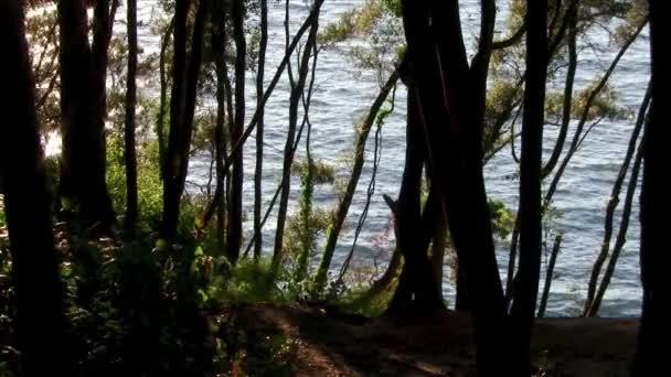 Sun trough the trees near a seaside