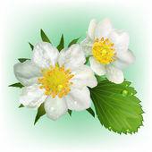 Kvetoucí jahody s listy. realistický obrázek