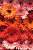 Barevný květinový vzor