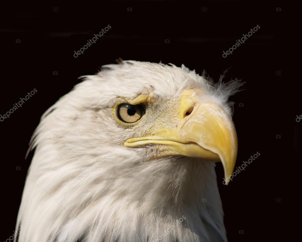 Eagle Eye Stockbild