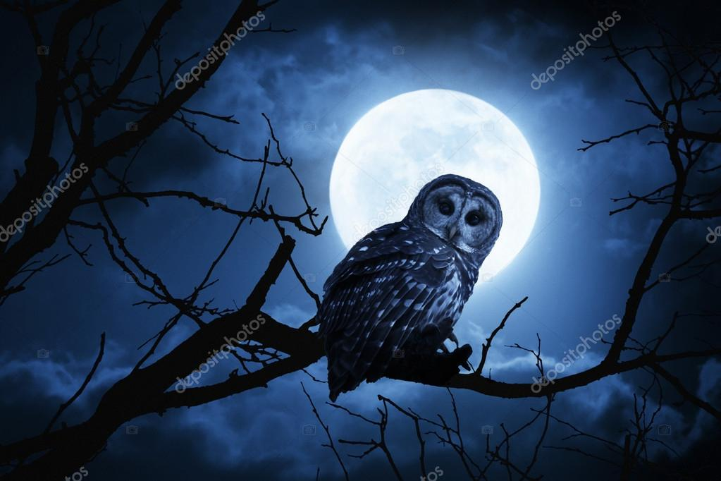 Owl Watches Intently Illuminated By Full Moon On Halloween Night
