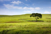 Fotografie poklidné přírodní krajina Midwest kansas tallgrass prairie zachovat
