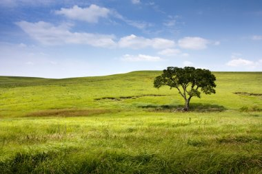 Serene nature landscape of the midwest Kansas Tallgrass Prairie Preserve