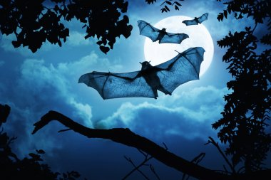 Creepy Bats Fly In By Full Moon For Halloween Night