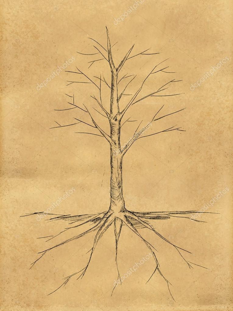Baum Zeichnen Keine Blatter Wurzel Auf Papier Stockfoto