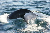 Fotografie Whale