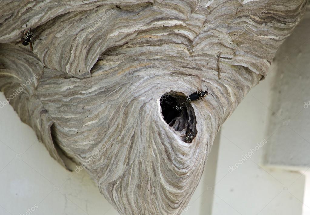 Large wasp nest under eves