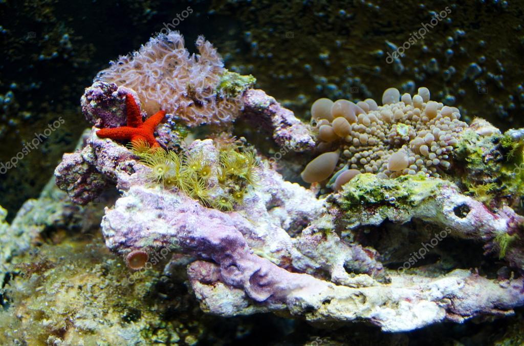 Sea animals in a salt water aquarium