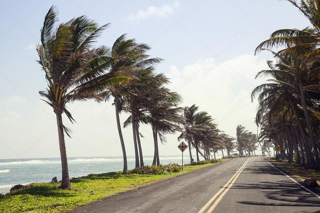 Palm Trees on the side of the Road