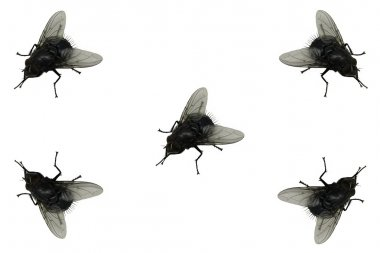 "Картина, постер, плакат, фотообои ""мухи."", артикул 41469065"