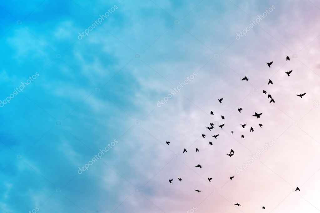 Birds in the sky.