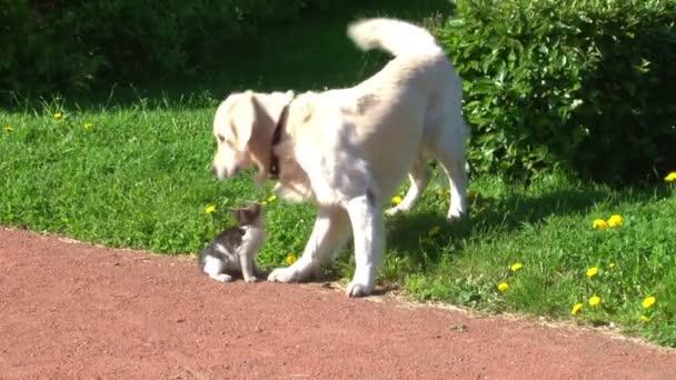 pes a kotě. St. petersburg. Rusko