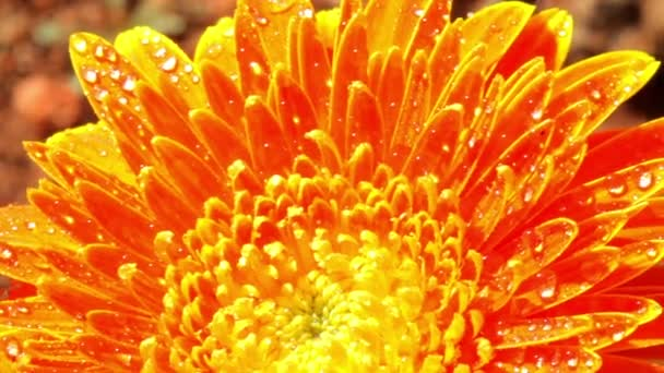 Flowers of India. Mysore. Karnataka