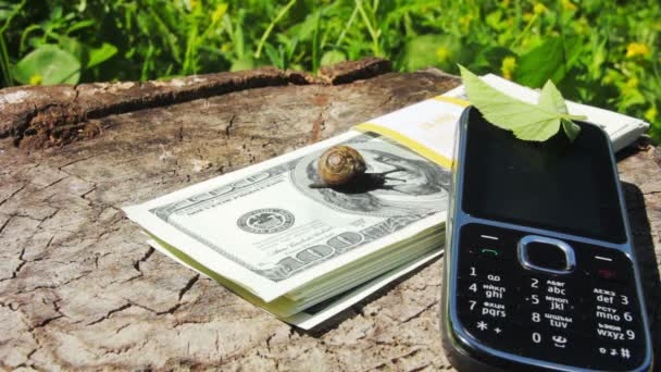 Snail crawling on a 100 dollar bill