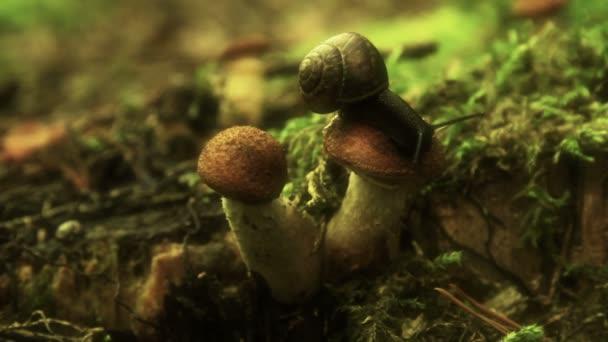 Snail crawling on a mushroom