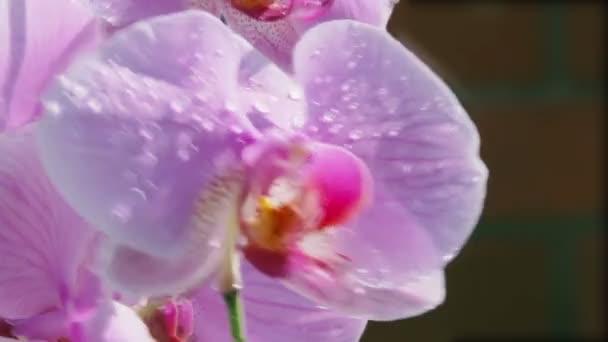 orchideje v dešti