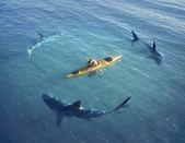 Cápa támadás egy hajón
