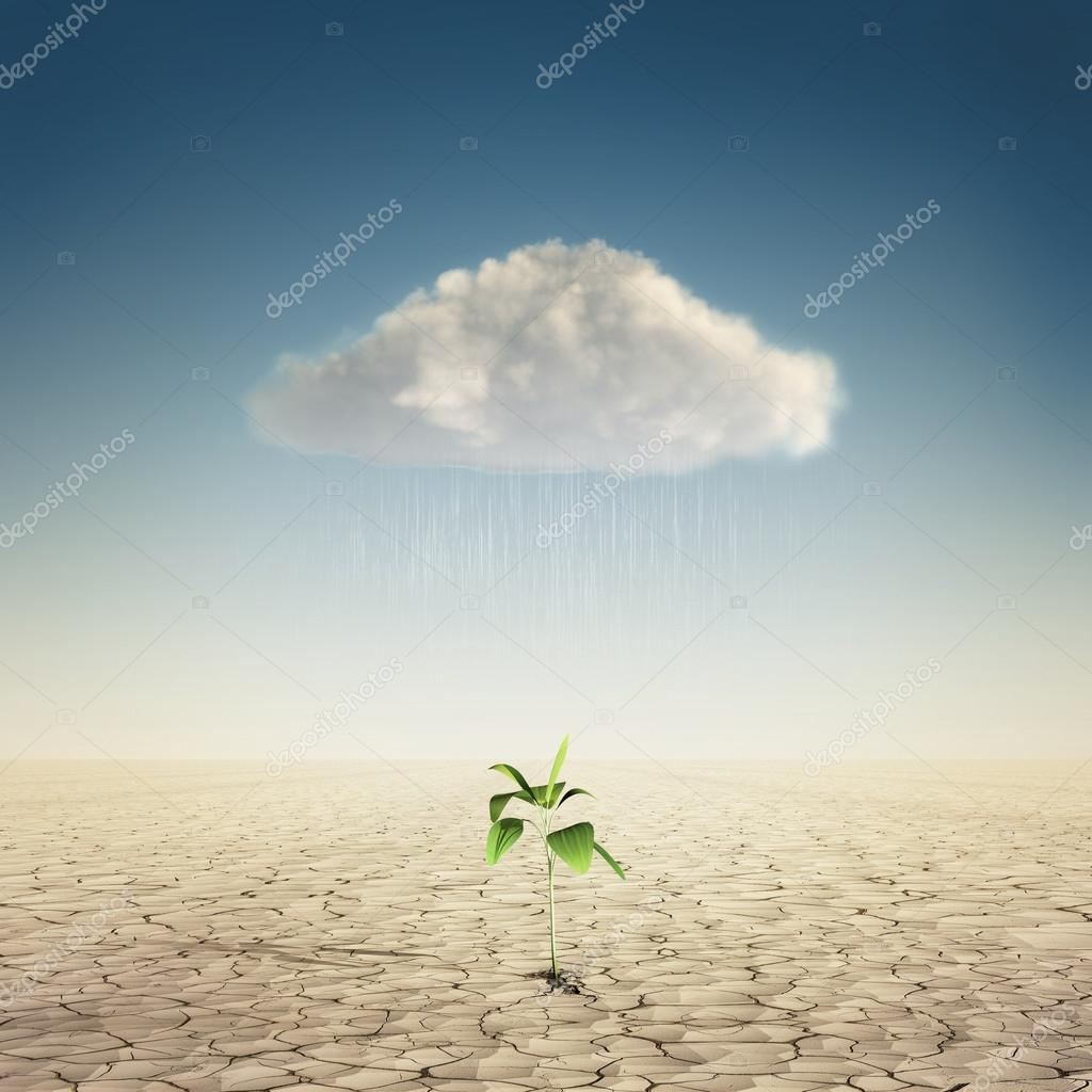 Cloud with water under the plant