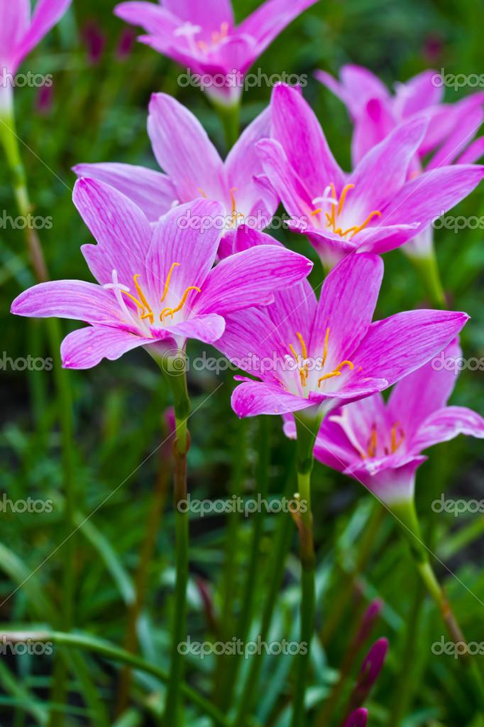 lila regen die Schönen
