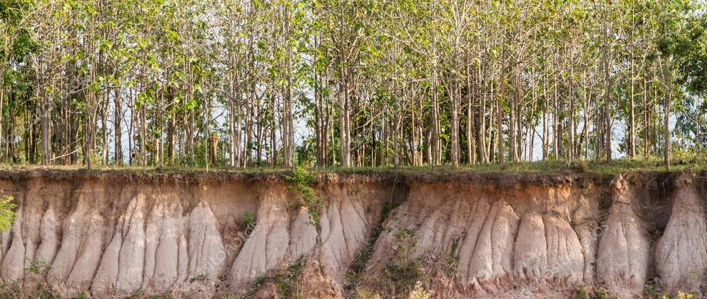 In the tree and section of soil. Erosion due to water erosion.