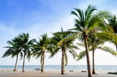 Exotic, beautiful and secluded beach with palm trees