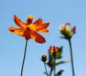 narancs virág