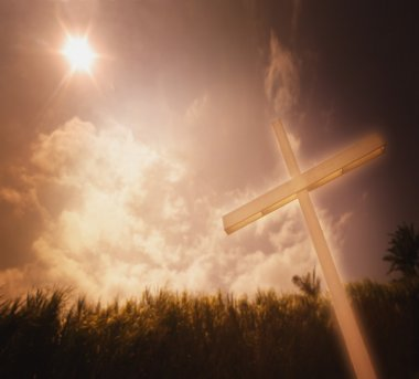 A Cross Against A Field Of Sugar Cane