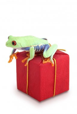 Frog Sitting On Red Package