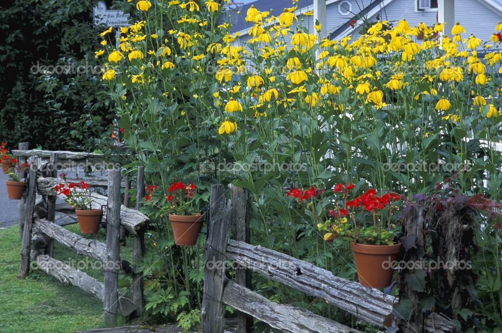 Arbusti Decorativi Da Giardino : Piante da giardino u foto stock designpicsinc