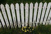 bílým plotem