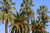 Fotografie Palm Trees