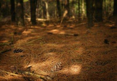 Pine Needles On Forest Floor stock vector