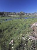 Photo Wildflowers In Meadow With Distant Beaver Pond