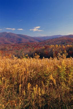 Pisgah National Forest In Autumn