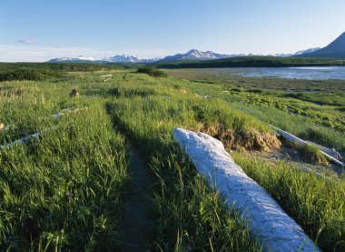 Foot Trail Along Grass And Driftwood