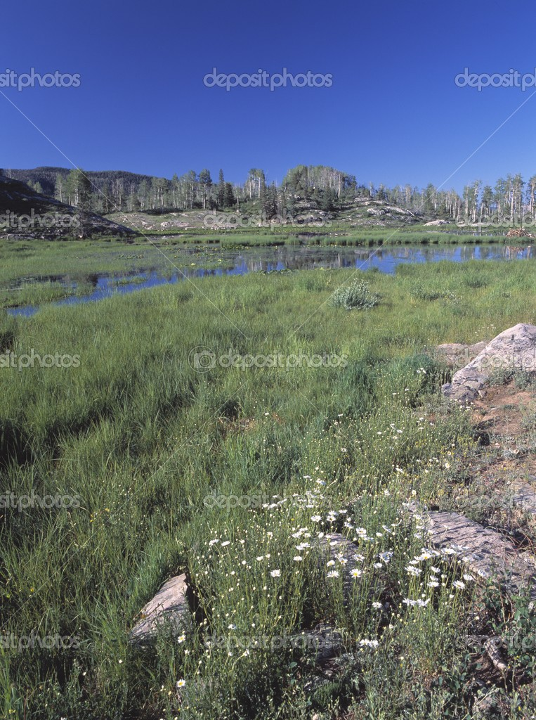 Wildflowers In Meadow With Distant Beaver Pond