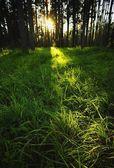 slunce, které svítí skrz stromy