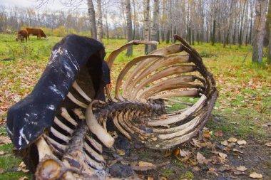 An Animal Carcass