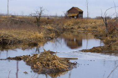 Beaver Dam In Secluded Area
