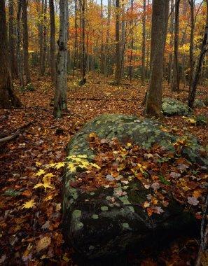 Autumn Forest Scene stock vector