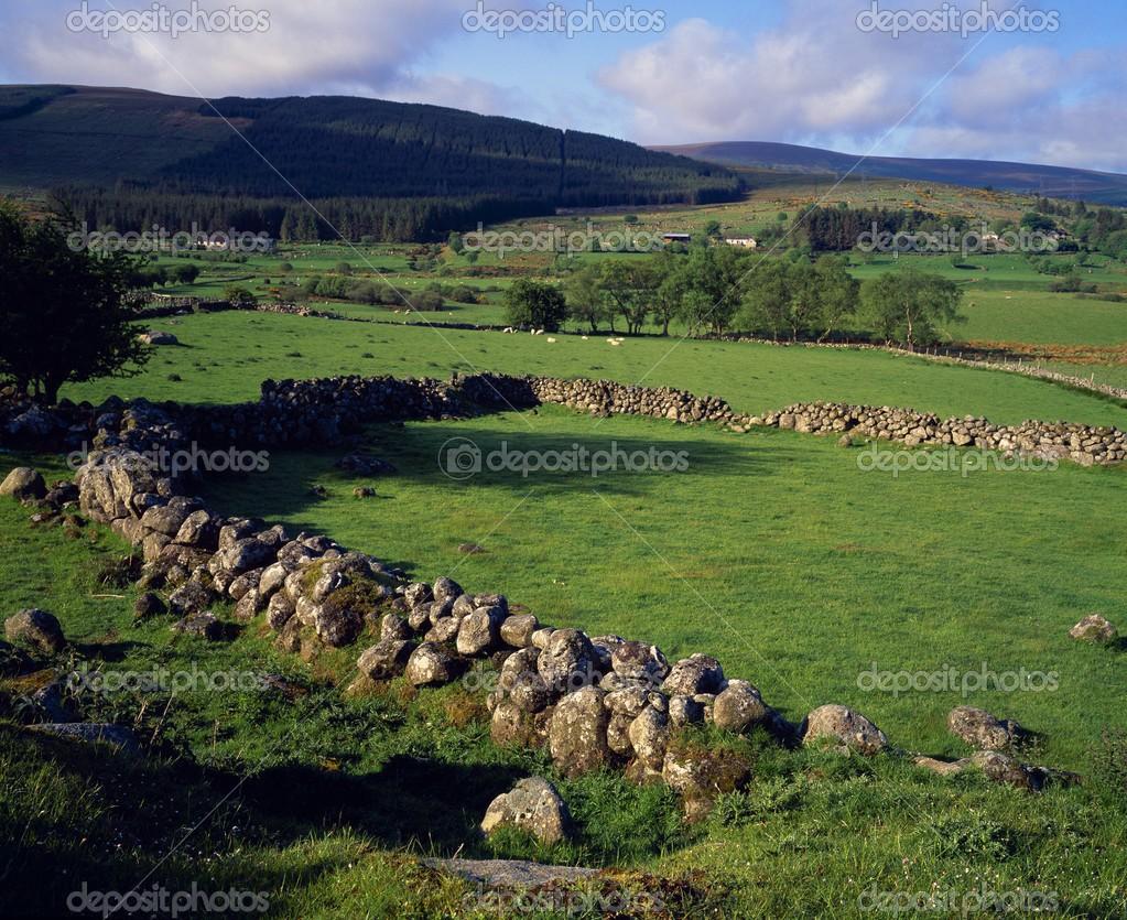 randki online rolnicy irlandia