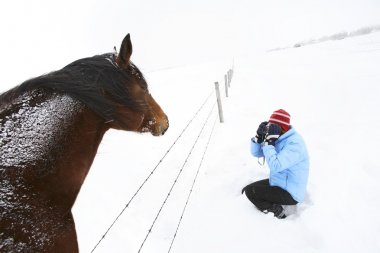 Person Photographing Horse