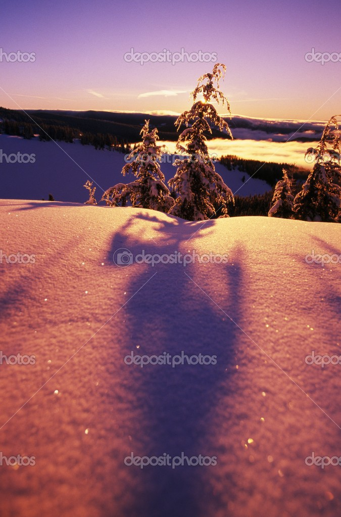Sun Casting Shadows On Snow Covered Trees