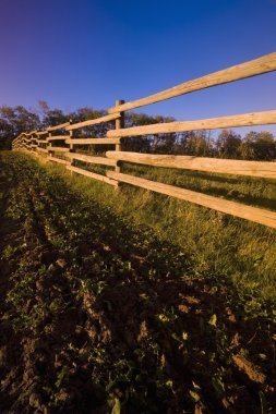 Wooden Fence And Crops