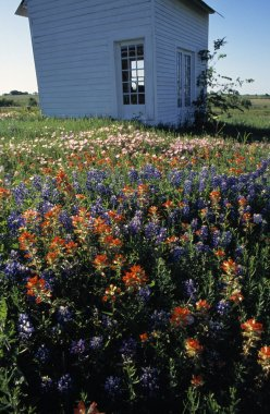 Outbuilding In Field Of Blooming Flowers